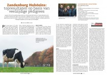Article Zandenburg HI Dutch