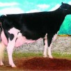 Windy-Knoll-View Promis EX-95-USA 2E GMD DOM