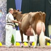 KHW Regiment Apple EX-96-USA | Res. Grand Champion WDE '13