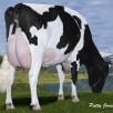 Gen-I-Beq Goldwyn Secret VG-87-CAN 2yr. | Close family member