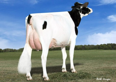 Des-Y-Gen Planet Silk VG-87-USA 2yr. | Same family