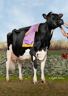Eastside Lewisdale Gold Missy EX-95-CAN