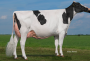 Holec Panzul VG-88-NL as a 3yr. old