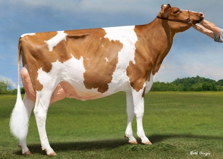 Dam: Luck-E McGucci Afro-Red EX-93-USA